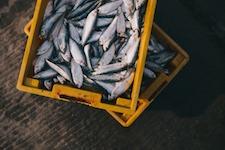 seafood-transportation-klang-malaysia